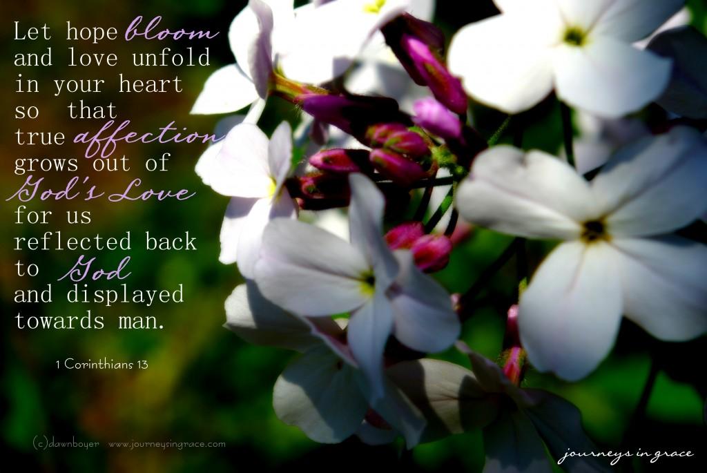 let love bloom 1 Cor 13