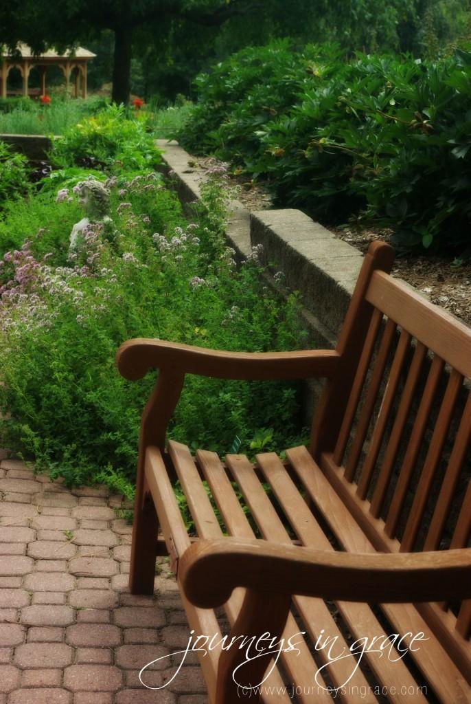 garden bench in herbs