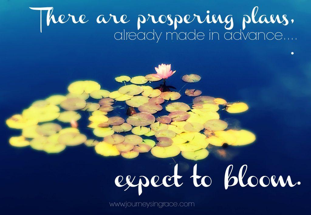 prospering plans