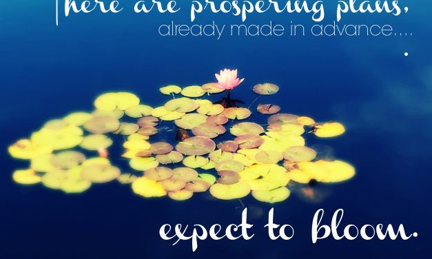Expecting Blooms-Soul Stops